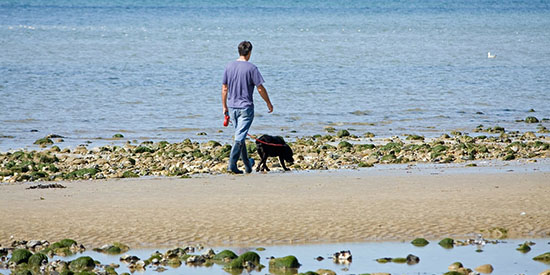 Majority of dog walkers flouting leashing laws on Victorian beaches