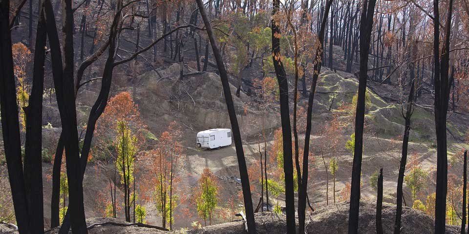 Past research points to potential economic impacts of recent bushfires
