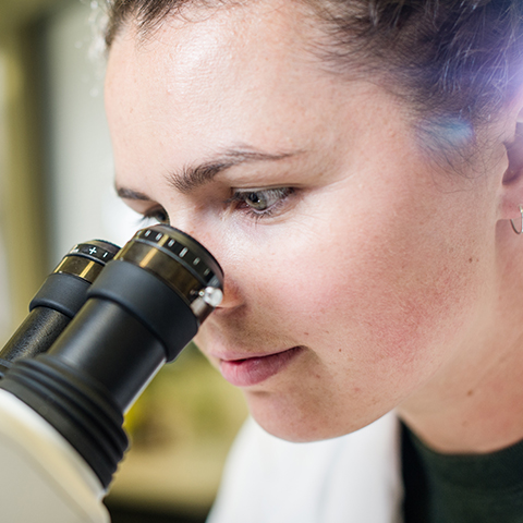 Female student looks through a microscope