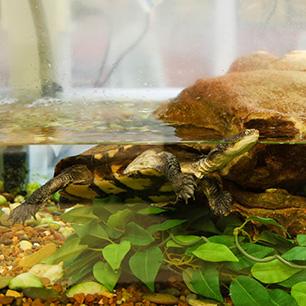 Zoology image 3