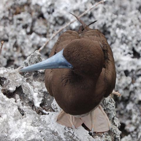 Zoology image 1