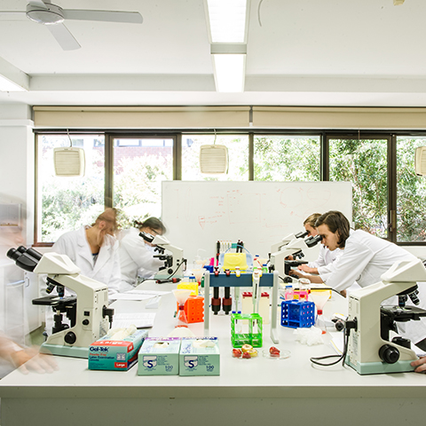 Students working together in lab