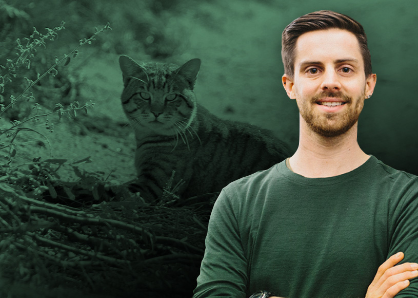 Feral cats dined out on at least 400 of Australia's vertebrate species and many invertebrates, but their damage isn't just confined to predation.