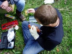Dr Mathew Berg measures a rosella.
