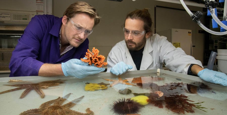 Science and environment courses at Deakin