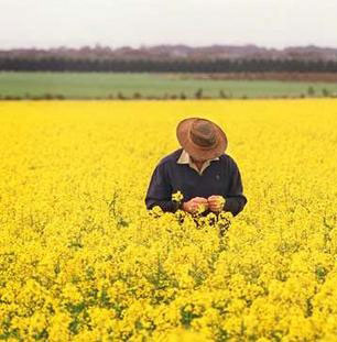 farmer in canola field