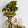 Kendal Murray's winning sculpture.