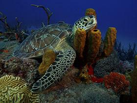 Turtle in sponges