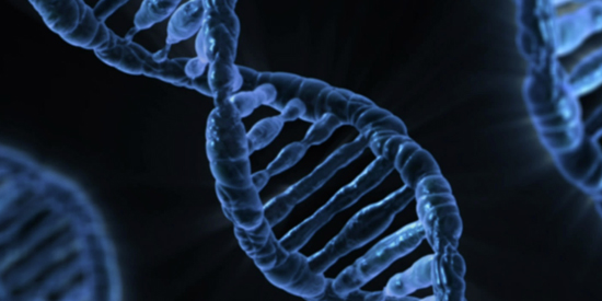 Epigenetics: research explores policy risks