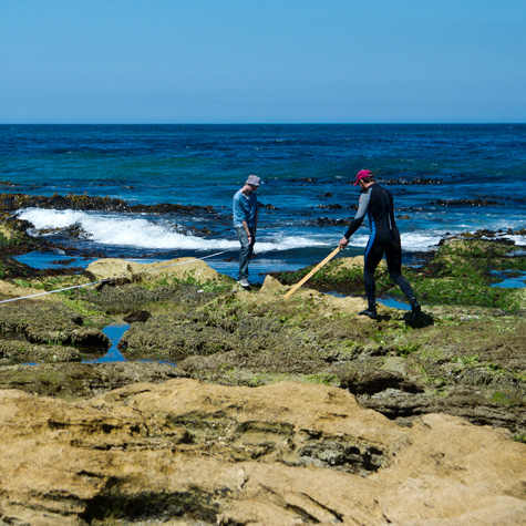 Bachelor of Environmental Science (Marine Biology) | Deakin